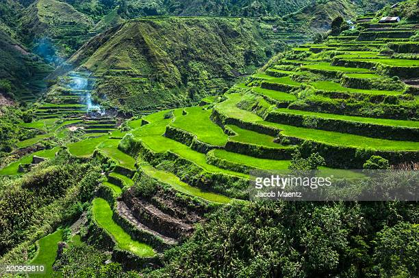 Rice terraces of the Philippine Cordilleras