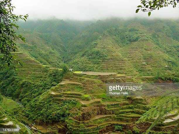 Rice terraces outside Banaue