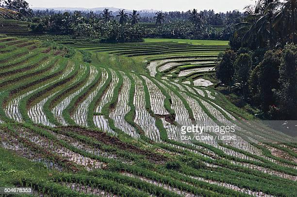 Rice terraces Tirta Gangga Cultural Landscape of Bali Province Indonesia