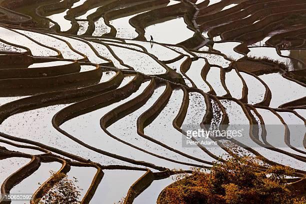 Rice Terraces, Yuanyang County, Honghe, China