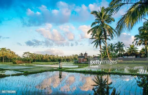 Ricefield Blick auf Bali in Indonesien