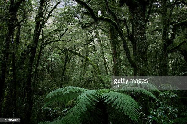 Rich dense forest