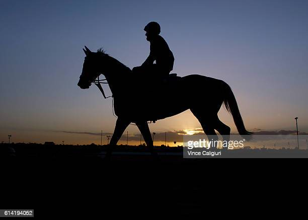 Richard Cronin riding Hartnell for the Godolphin stable during a trackwork session at Moonee Valley Racecourse on October 13 2016 in Melbourne...