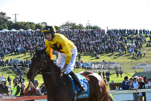 Richard Cully riding No Song No Supper heads to the start in front of the crowd on the hill before winning Race 7 Grand Annual Steeplechase during...