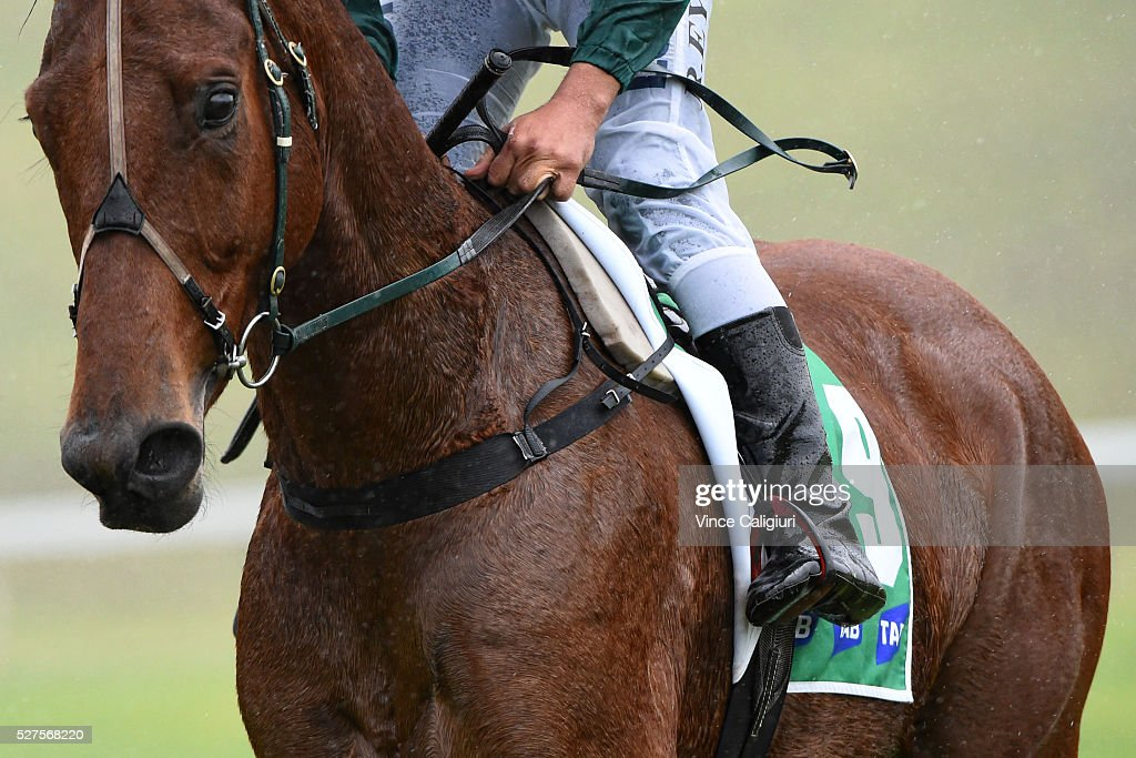 Richard Eynon riding Trinidadian in Race 2, the TAB.Com.au Maiden Hurdle during Brierly Day at Warrnambool Race Club on May 3, 2016 in Warrnambool, Australia.