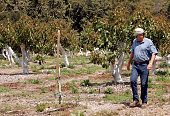 Richard Sanchez walks past one of the trees that did not survive the freeze Richard and Mary Louise Sanchez grow avocados on 50 acres of their land...