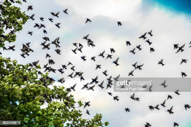 Richmond Park: Typical Birdlife