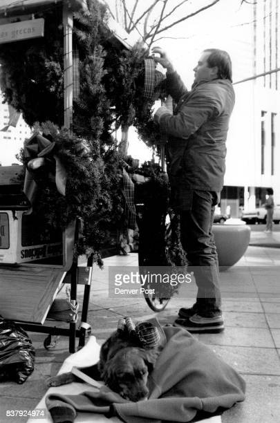 Rick McGee does a little touching up with a wreath as Meghan his Golden retreiver relaxes under a coat on the corner of 16th and Curtis Credit The...