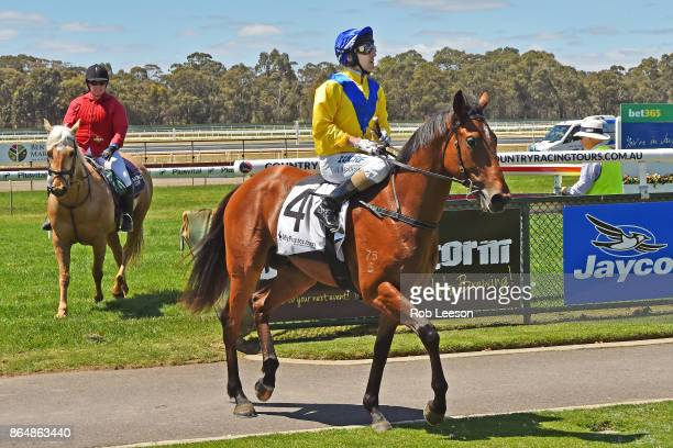 /4/ ridden by /4/ returns to scale after winning the /1/ at Bendigo Racecourse on October 21 2017 in Bendigo Australia