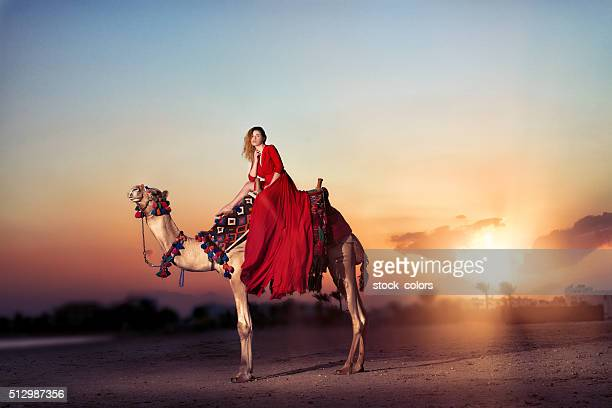 ride with the camel at sunset