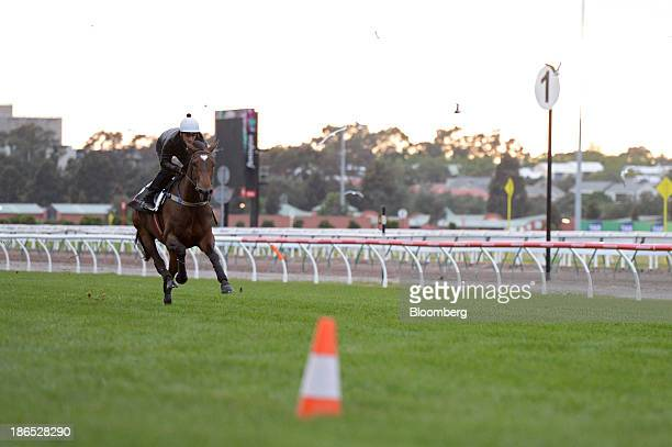 A rider and a horse test the track during early morning trackwork at Flemington Racecourse venue for the Melbourne Cup thoroughbred horse race in...