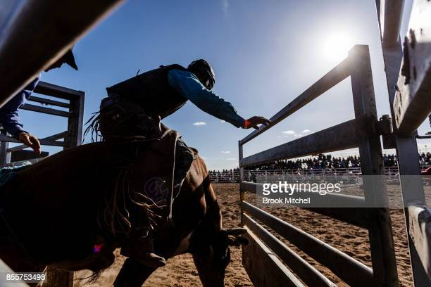 A rider and bull in a pen before the start of a ride during the Deni Rodeo at the 2017 Deni Ute Muster on September 30 2017 in Deniliquin Australia...
