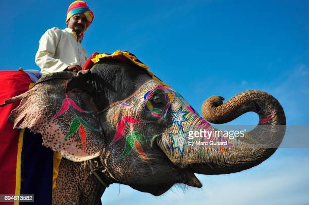 A rider and his elephant at the Elephant Festival, Jaipur Elephant Festival, Rajasthan, India