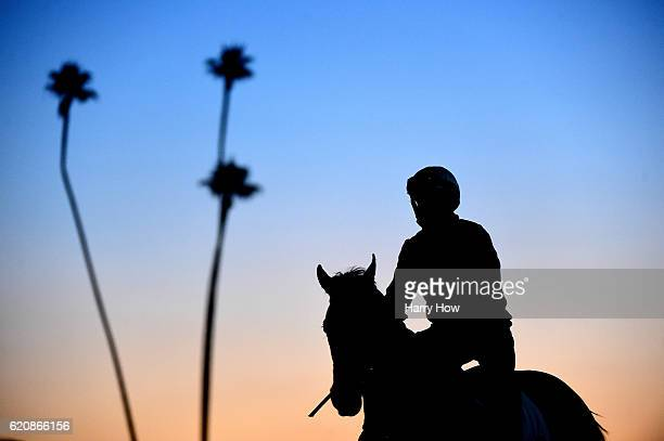 A rider and horse during training for the 2016 Breeders' Cup World Championships at Santa Anita Park on November 3 2016 in Arcadia California