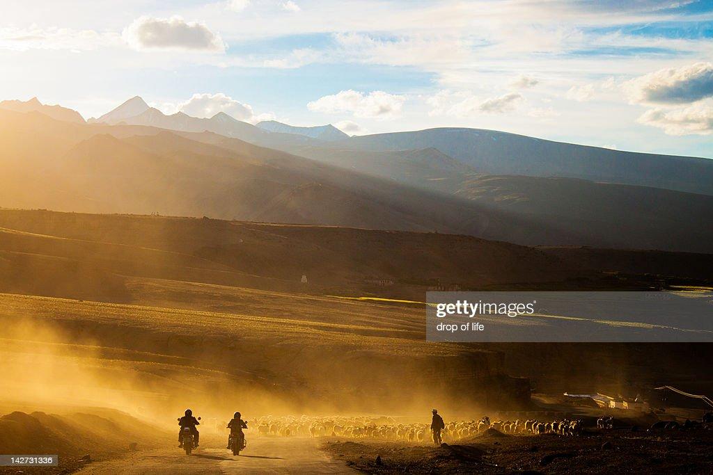 Riders and shepherd on road