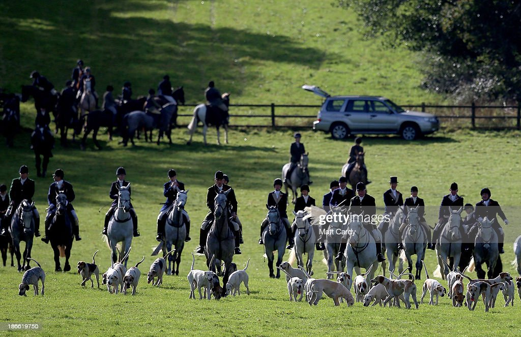 Riders from the Duke of Beaufort's Hunt arrive with the hounds for their opening meet of the season at Worcester Lodge on November 2, 2013 near Badminton in Gloucestershire, England. Traditionally the hunting season starts at the beginning of November and although a ban on fox hunting with dogs has been in force since February 2005, many supporters of fox hunting are continuing to call for a repeal of the ban, saying the current law is hard to interpret and enforce.