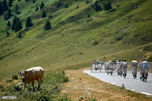 Riders pass a cow on the side of the road during the descent of the Col du Tourmalet during stage eleven of the 2015 Tour de France a 188 km stage...