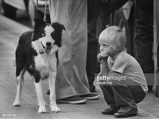 Rikka Bothun Berthoud dog Jock is a Scottish Border collie Credit Denver Post