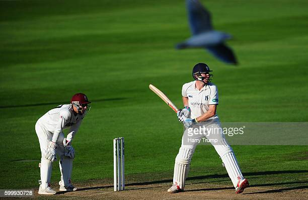 Rikki Clarke of Warwickshire prepares to bat as a seagull flies past during Day Two of the Specsavers County Championship Division One match betwen...