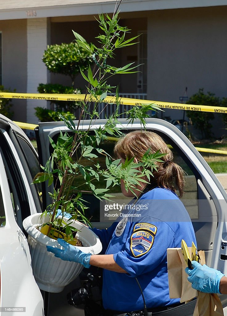 Rilato Police technician Noretta Barker puts a medicinal marijuana plant into a police car as evidence is gathered from Rodney King's home on June 17, 2012 in Rialto, California. King, whose video beating by Los Angeles police in 1991 sparked riots after the acquittal of the four officers involved, was found dead at the age of 47 from an apparent drowning in his swimming pool.