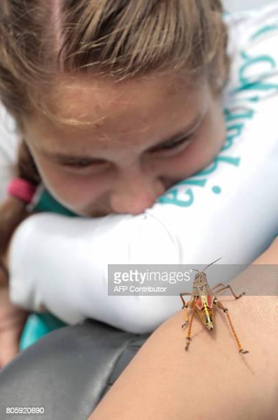 Riley Brooks looks at a lubber grasshopper at the Arthur R Marshall Loxahatchee National Wildlife Refugee in Boynton Beach Florida on June 19 2017...