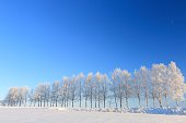 Rime to tree-lined streets and empty hills of Biei