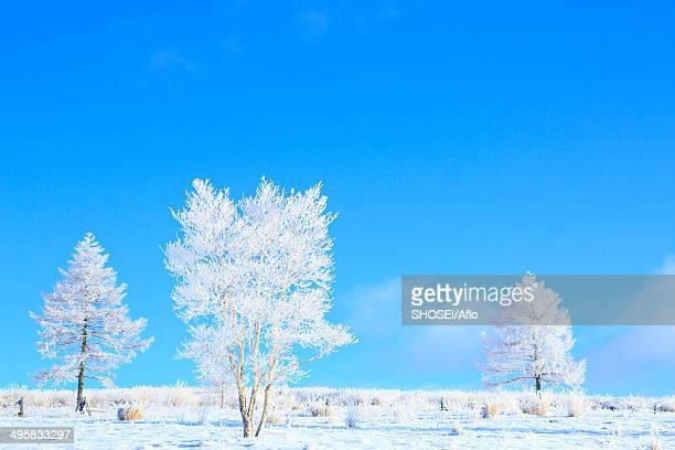 Rimed trees, Japan
