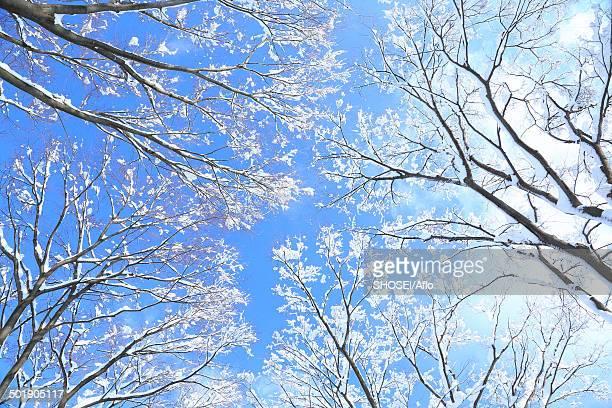 Rimed trees