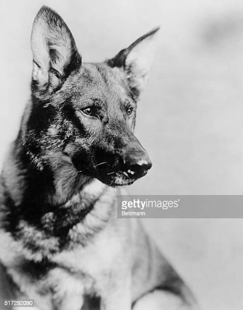 Rin Tin Tin Warner Bros dog star
