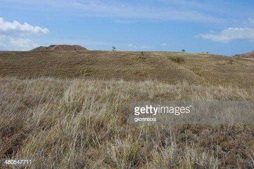 Rinca island dry landscape, Indonesia : Stock Photo