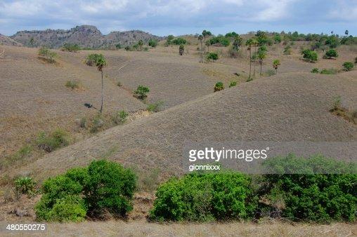 Ilha de Rinca seco paisagem, Indonésia : Foto de stock
