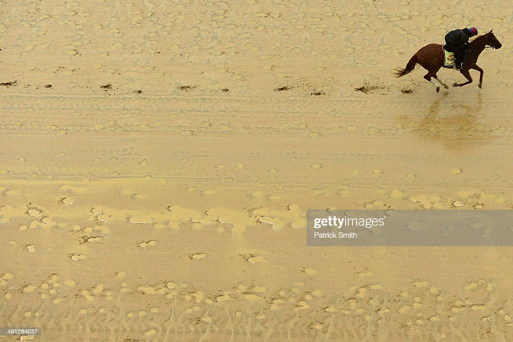 Ring Weekend walks over the track in preparation for the 139th Preakness Stakes at Pimlico Race Course on May 16 2014 in Baltimore Maryland