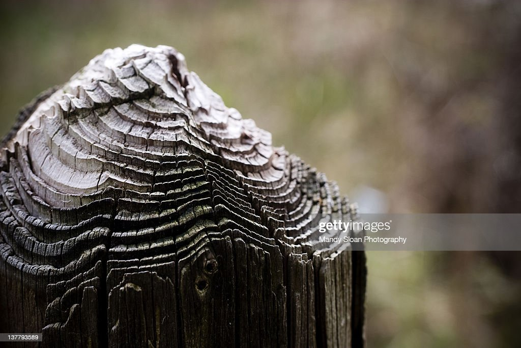 Rings of weathered tree : Stock Photo