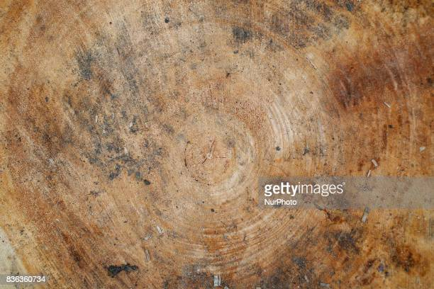 Rings on a recently cut tree stump are seen on 20 August 2017 Recent storms have caused severe damage to over 110 thousand acres in the country