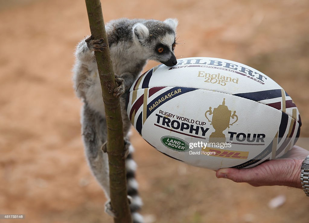 A ring-tailed lemur, which is indigenous to Madagascar, poses with the Rugby World Cup Trophy Tour ball during a visit to the Lemur Park during the Rugby World Cup Trophy Tour in Madagascar in partnership with Land Rover and DHL ahead of Rugby World Cup 2015 on July 5, 2014 in Antananarivo, Madagascar.