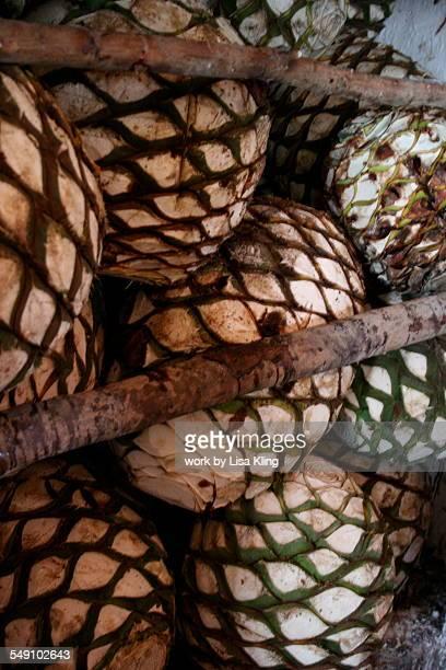 Ripe Agave Fruit