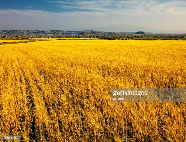 Maduro campo de cebada Bardenas Reales de Navarra España