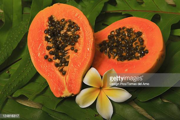 Ripe juicy papaya cut in half on bed of green leaves with a plumeria