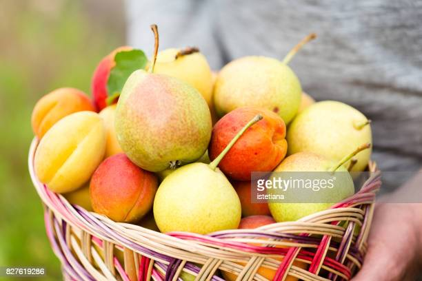 Ripe organic pears and apricots in wooden basket