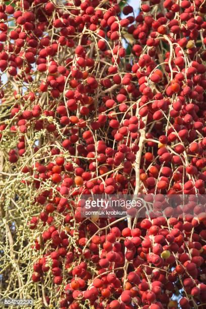 Ripe palm fruit