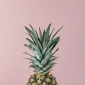 Ripe pineapple close up on pink pastel background. Minimal fruit concept.