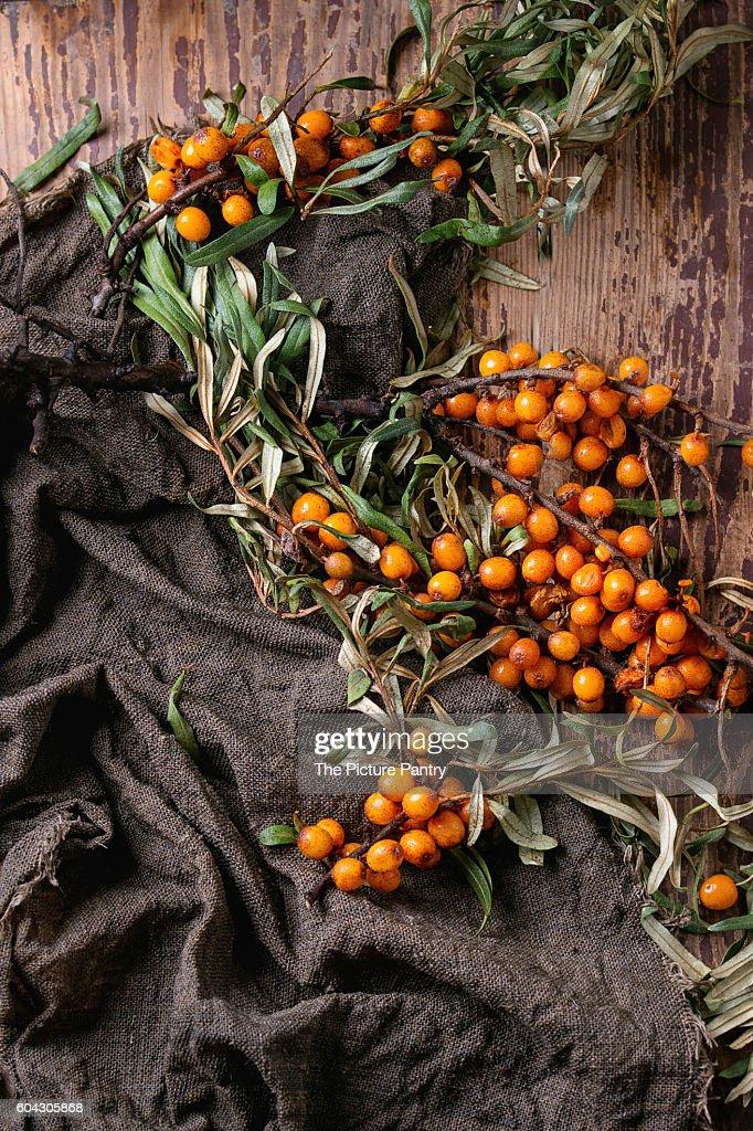 Ripe sea buckthorn berries : Photo