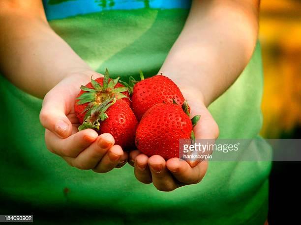 Ripe strawberries being held in someone's hands