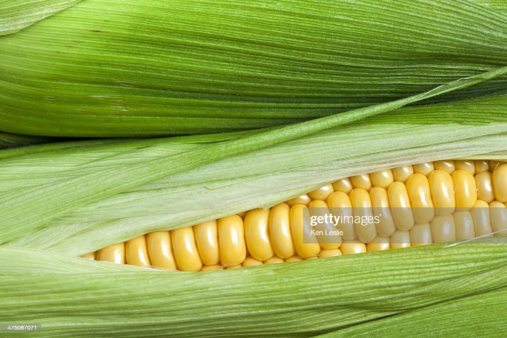 Ripe sweet corn in its husk