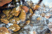 Concentric ripples and sky and tree reflections in a shallow pebble filled stream bed