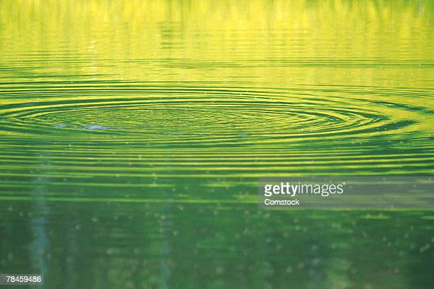 Ripples in water on surface of pond
