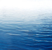 Ripples on blue water surface