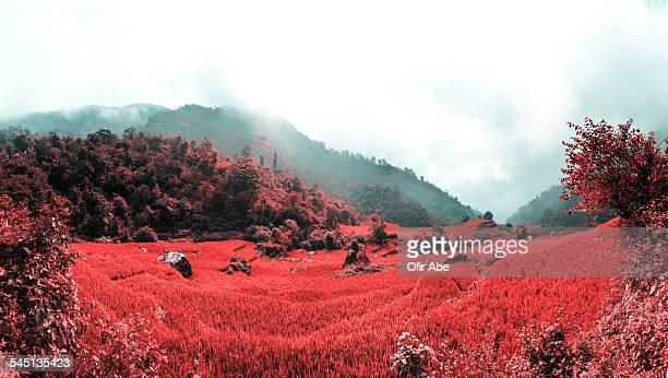 Rishikesh Red Vally