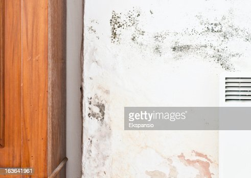 Rising Damp And Mildew Or Mold On Wall With Furniture