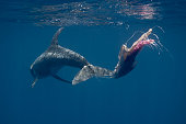 Rissos dolphin entangles in fishing line and plastic bags, Sri Lanka